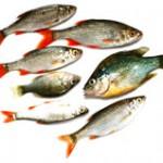Des poissons pas toujours très frais