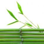 Le bambou repousse les limites