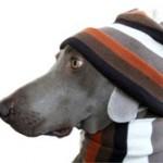 De la laine de chien