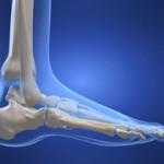 Modélisation des os du pied